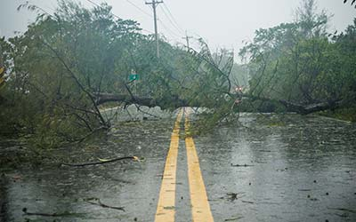 downed tree over road